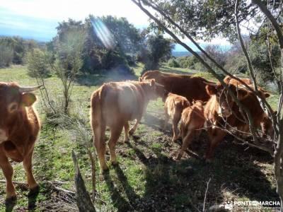 Alto del Pinar, Dehesa de Navalquejigo;excursiones culturales viajes organizados fin de semana asoci